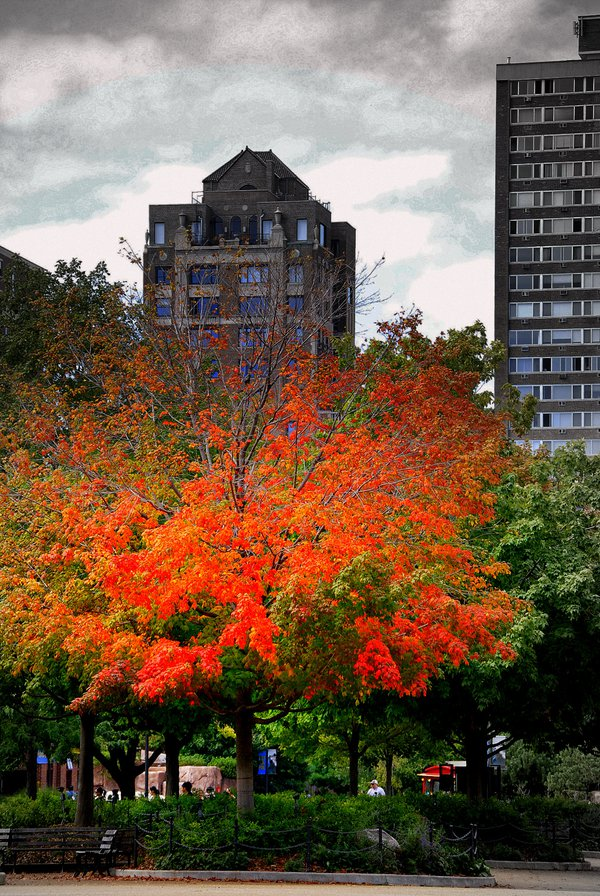 Fall in Lincoln Park Chicago Il thumbnail