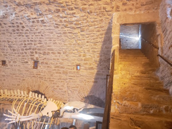 Ottoman Fortress Whale Skeleton  thumbnail