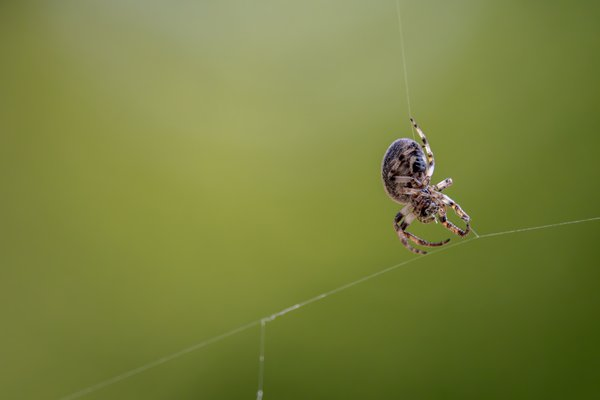 The elegance that is the spider.  thumbnail