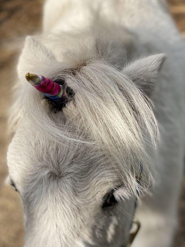 Unicorns do exist thumbnail
