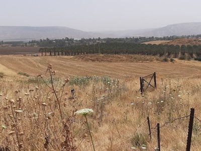 The 'Ubeidiya site today is an expanse of grasses. Concealed from this view are slabs of fossilized pebbly clay, a source of ancient finds that have helped scholars learn about the journeys of Homo erectus.