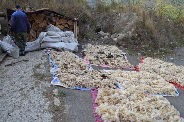 Armenian Sheep Wool for sale thumbnail