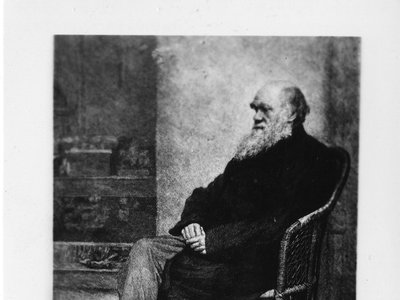 Charles Darwin was an avid fossil collector and during his expedition on the HMS Beagle, he was one of the first to collect remains of extinct South American mammals.