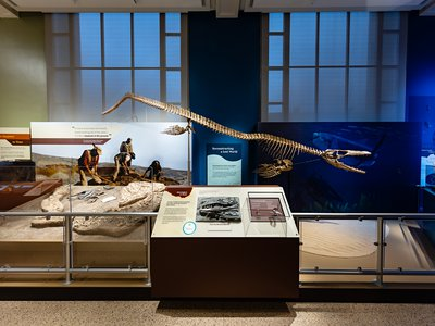 """A new exhibition at the Smithsonian's National Museum of Natural History reveals how millions of years ago, large-scale natural forces created the condition for real-life sea monsters to thrive in the South Atlantic Ocean basin shortly after it formed. """"Sea Monsters Unearthed"""" offers visitors the opportunity to dive into Cretaceous Angola's cool coastal waters, examine the fossils of striking marine reptiles that once lived there, and learn about the forces that continue to mold life in the ocean and on land. (Smithsonian Institution)"""