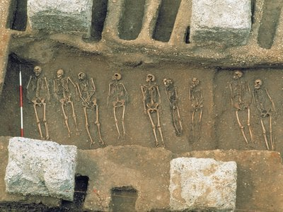 The genetic lineage of the plague that hit London in 1348 gave Green a data point to track the disease back to its origin.