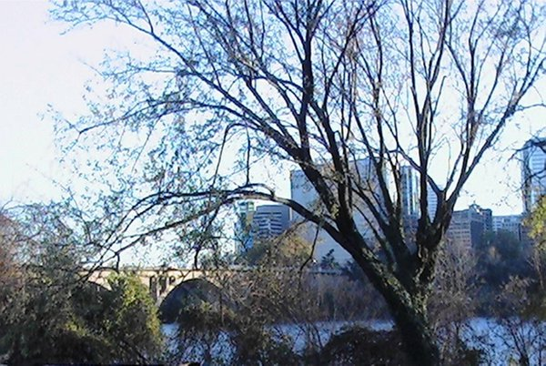 Nature Embracing Rosslyn's Cityscape  thumbnail