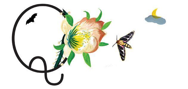 Ask-Smithsonian-butterfly-631.jpg