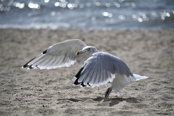 The Seagull has landed thumbnail