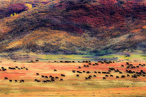 Pasture thumbnail