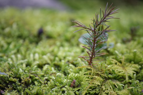 Plant in the Moss thumbnail