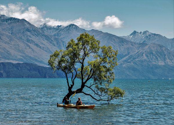 Kayaking under the Wanaka tree thumbnail