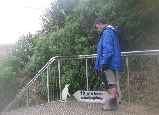 Halfway to the Bottom of the Earth: The Catlins