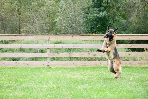 "Search Dog ""Killian"" Gets His Reward thumbnail"