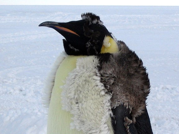 14 Fun Facts About Penguins