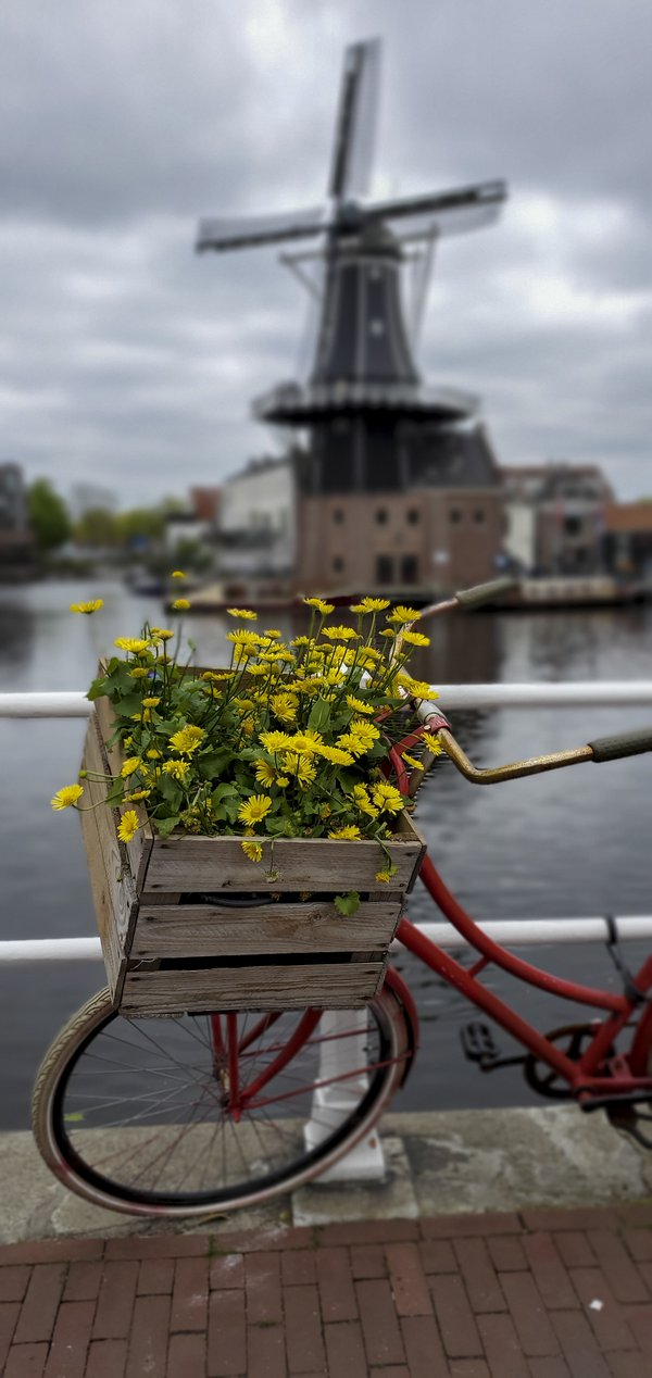 A Basket Of Flowers On A Bicycle. thumbnail