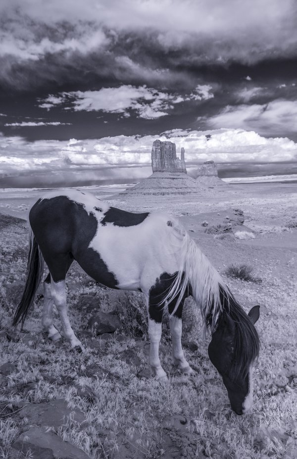 Spirit Horse thumbnail