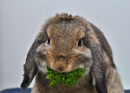 Bunny_new2.jpg