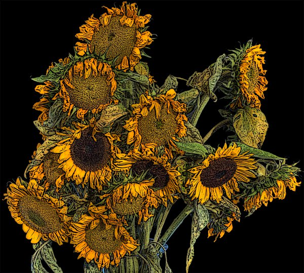 Wilted Sunflowers No. 1 thumbnail