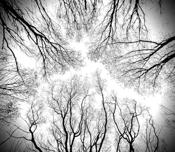 Haunted Woods thumbnail