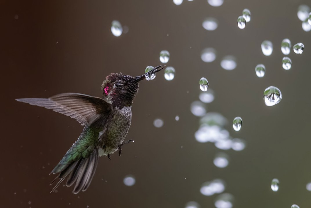 See Birds Dive, Splash and Play in These Prize-Winning Photos
