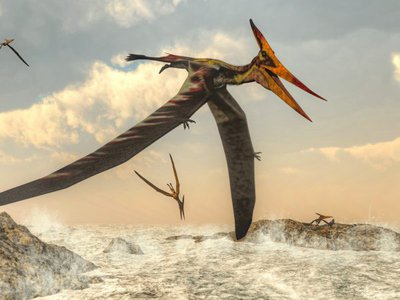 The pterosaurs were flying reptiles that lived in the age of the dinosaurs. This is an artist's illustration of a member of the genus Pteranodon, which included some of the largest known flying reptiles.   .