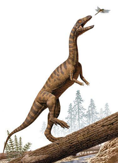 Effigia dinosaur