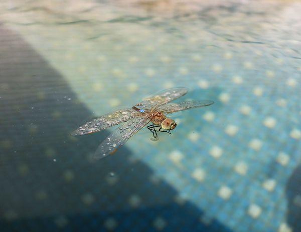 Dragonfly thumbnail