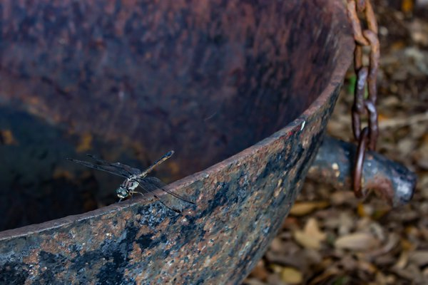 Rusted Resting Place thumbnail