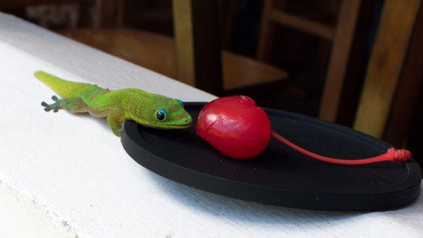 Little Green Maraschino Cherry Lover thumbnail