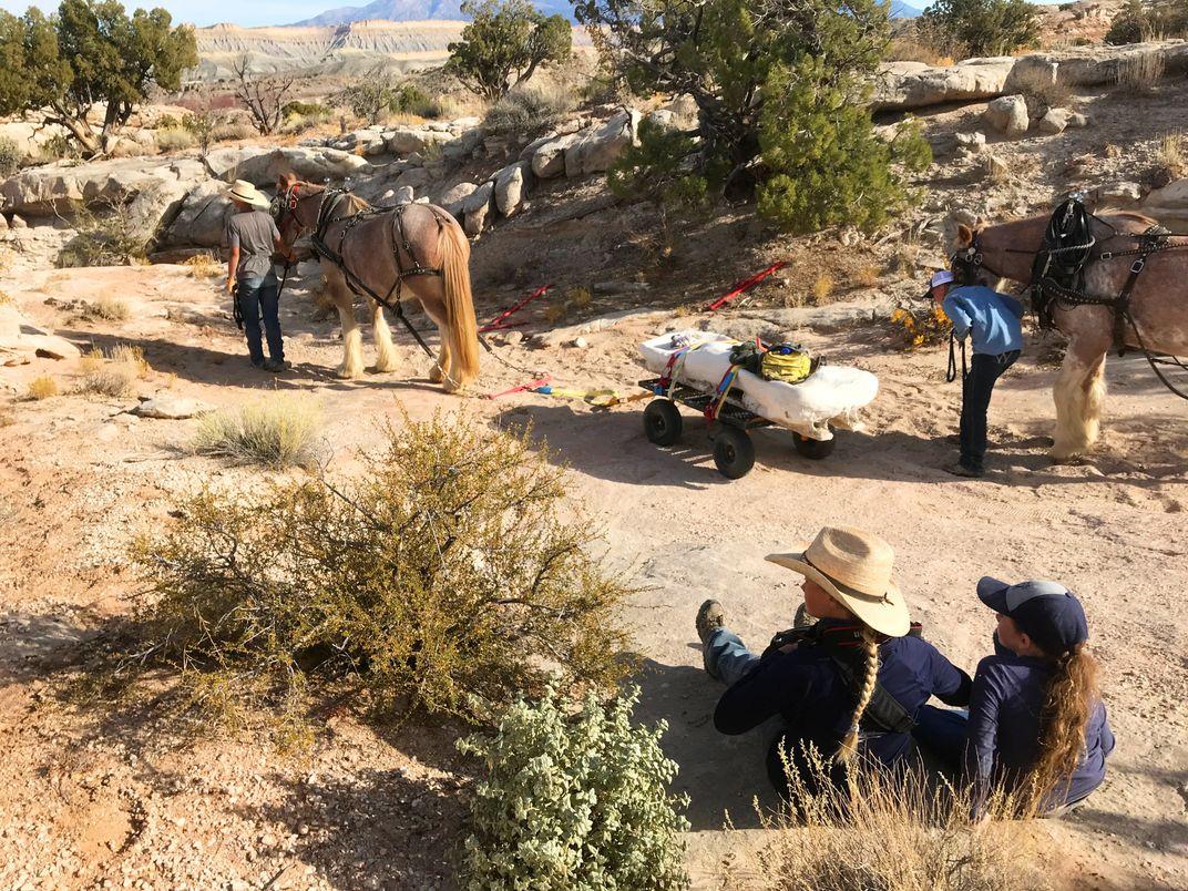 A Pair of Horses Helped Excavate a Hulking Brachiosaurus Fossil in Utah