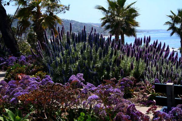 Laguna Beach thumbnail