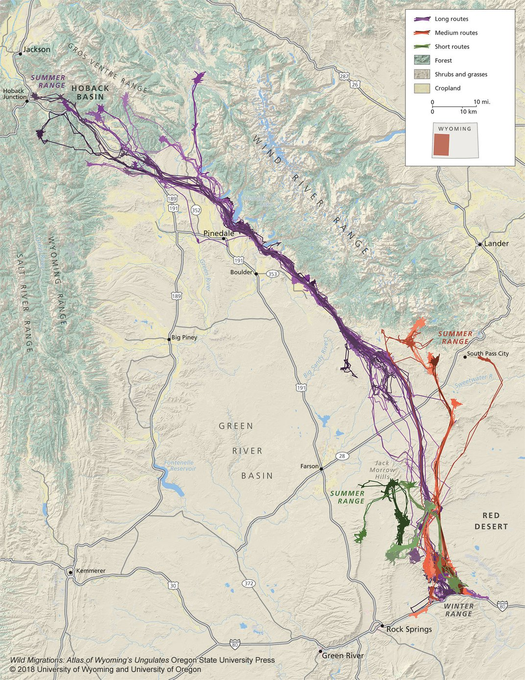 New Tracking Technology Reveals Hidden Animal Migration Routes