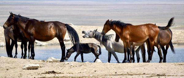 Wild Horses being conversational. thumbnail