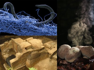 Deep Earth creepy crawlies, mushrooms making rain, and a Maya city buried in ash are just a few highlights from this year's collection of science stories.