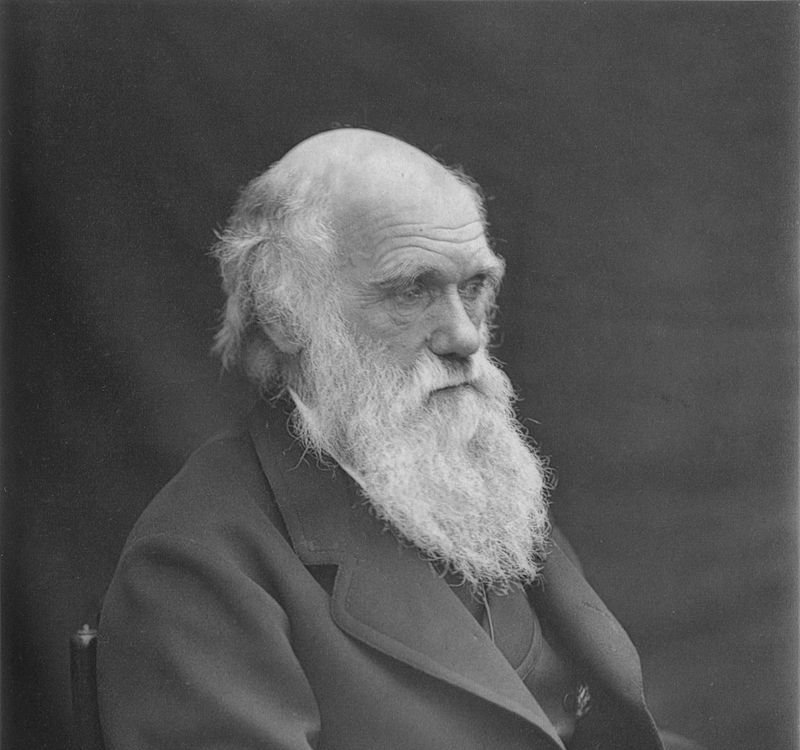 800px-1878_Darwin_photo_by_Leonard_from_Woodall_1884_-_cropped_grayed_partially_cleaned.jpg