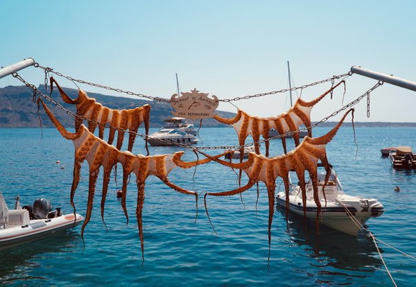Fresh Catch in Santorini thumbnail