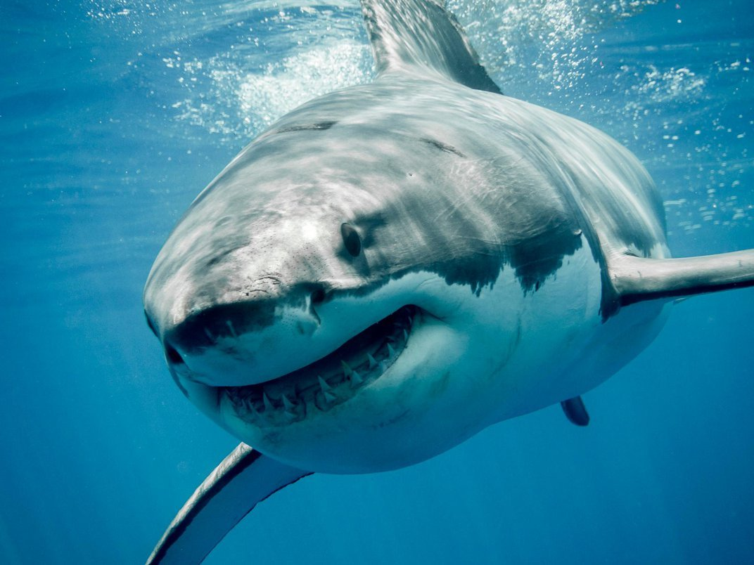 The Real Science Behind the Megalodon
