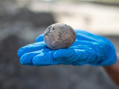 Though researchers repaired the crack, much of the egg's contents leaked out.