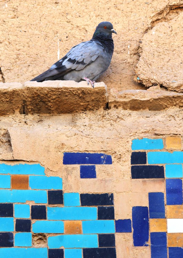 Pigeons and tiles thumbnail
