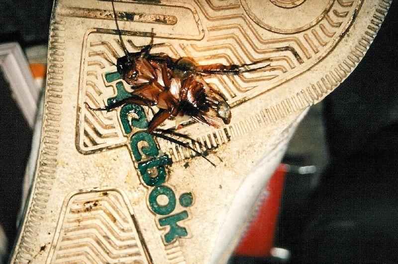 bug on shoe