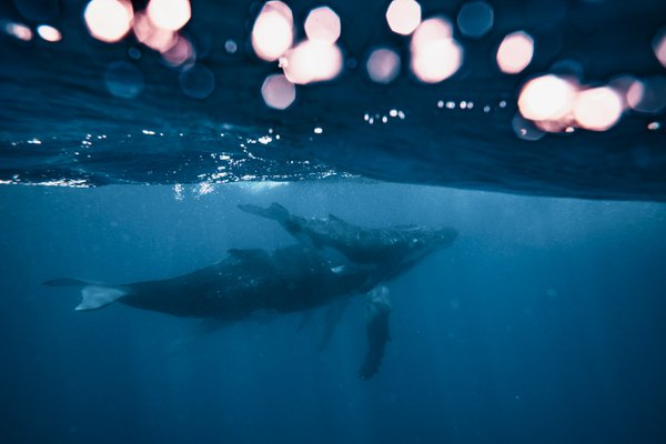 Whales and lights  thumbnail