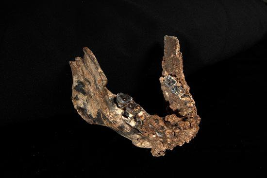 Multiple Species of Early Homo Lived in Africa