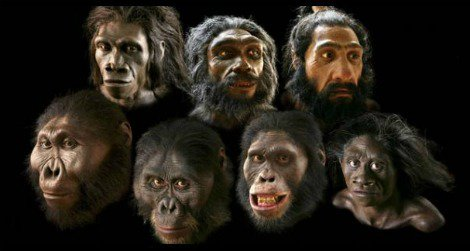 What if we could make masks to look like these models in the Natural History Museum's Hall of Human Origins?