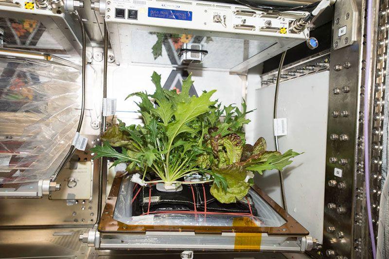 space-salad.jpg