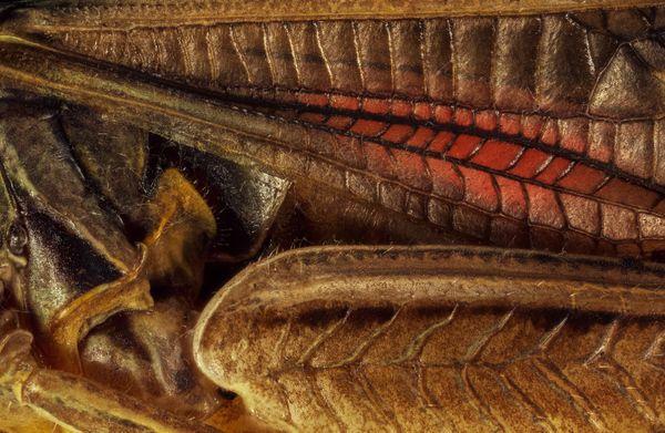 Gigerian Creature thumbnail