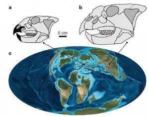 20110520083225new-ceratopsian-biogeography-300x235.jpg