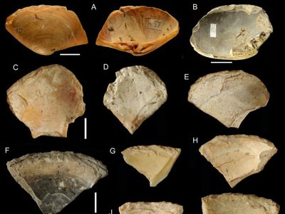 Clam shells, likely collected from live clams, would have made for naturally sharp cutting tools.
