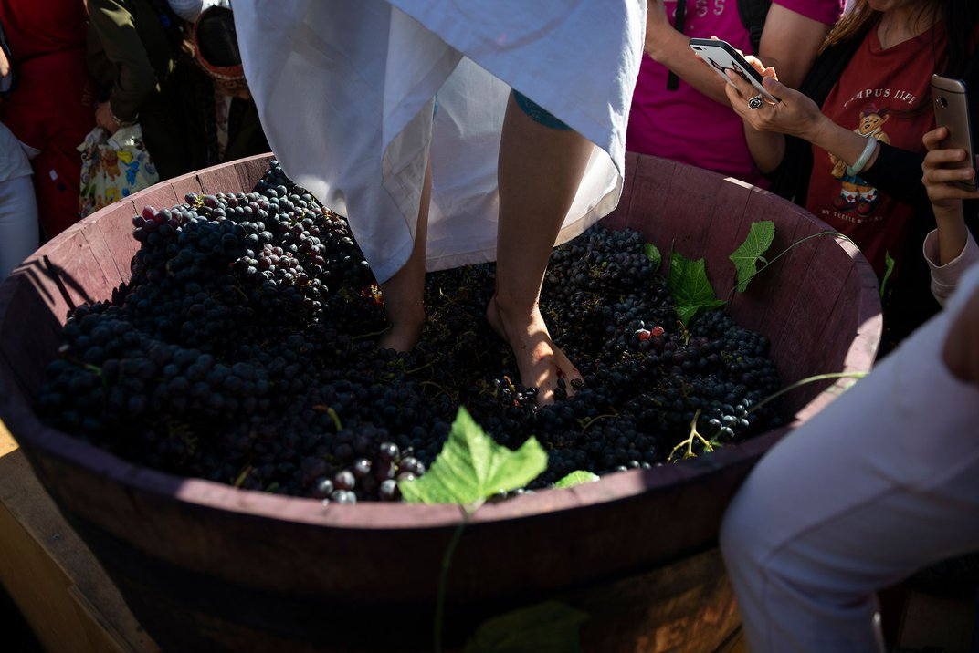 Pictured from the shins down, a person stands in a wooden barrel crushing grapes.