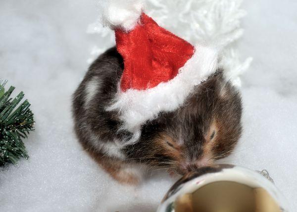 Christmas Abby thumbnail