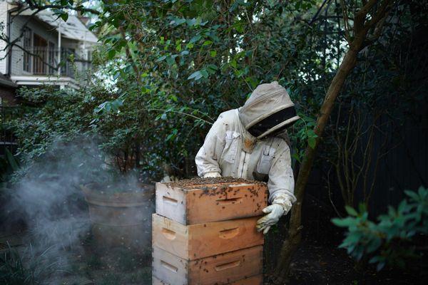 Honey bee hive health check thumbnail